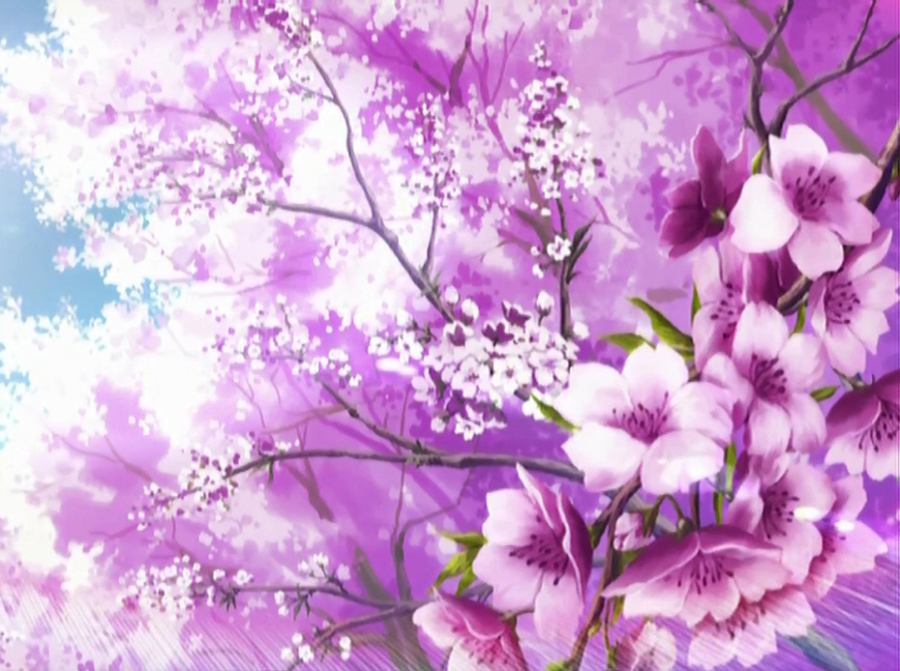 sakura-blossoms-wallpaper-1